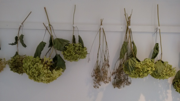 A row of dried plants hanging inside the cafe area